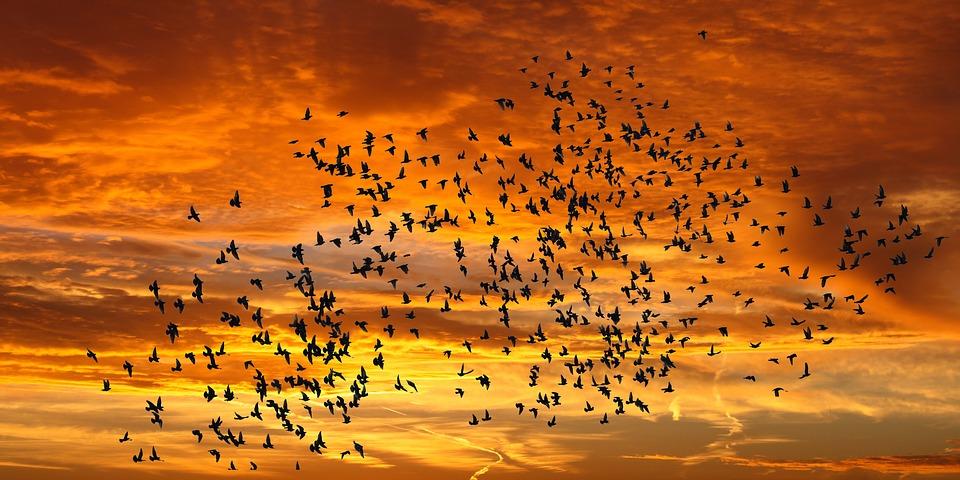 Afbeelding bij studio-opname van 'Zouden Wij Vogels Willen Zijn?' door Frank de Zanger