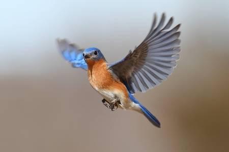 zo vrij als een vogel,FdeZanger